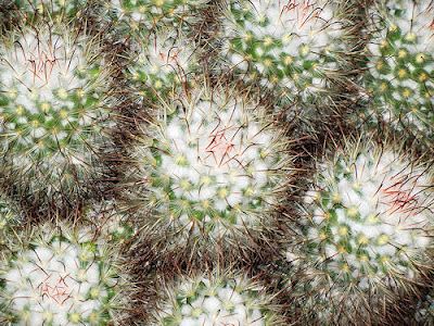 Photo Friday: Cactus Close-Up - April 15, 2011