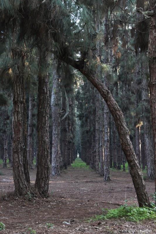 Forêt de Nouzhat Ibn Sina, Rabat.