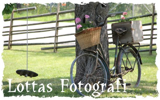 Lottas Fotografi