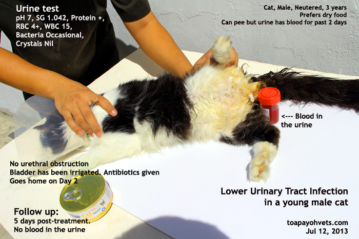 Food Vets Prefer For  Year Old Male Cat