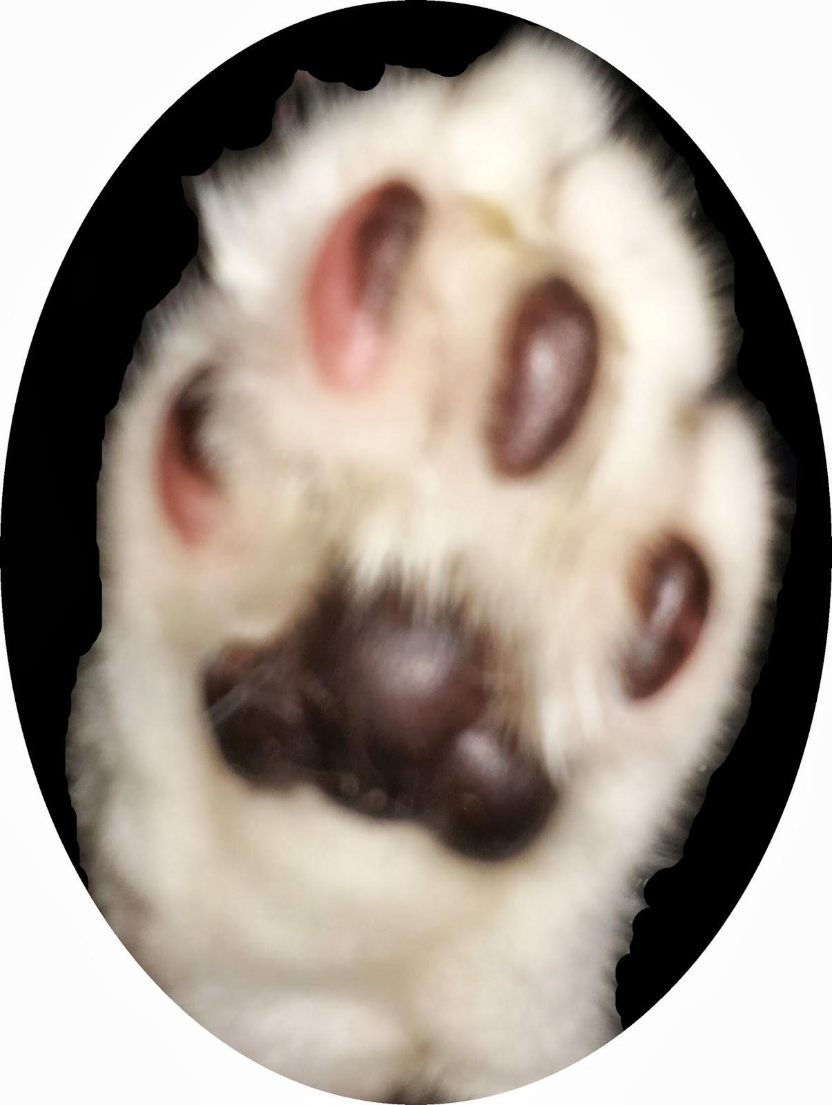 Image: Mr Bumpy's paw.