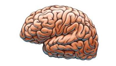 razonamiento-moral-cerebro