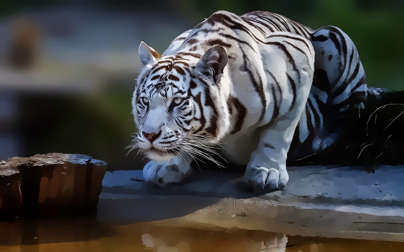 White Tiger Wallapper