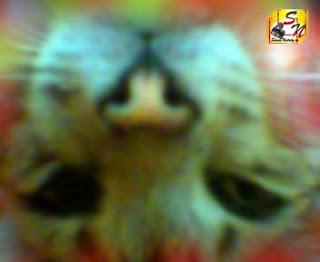 Кот вниз головой