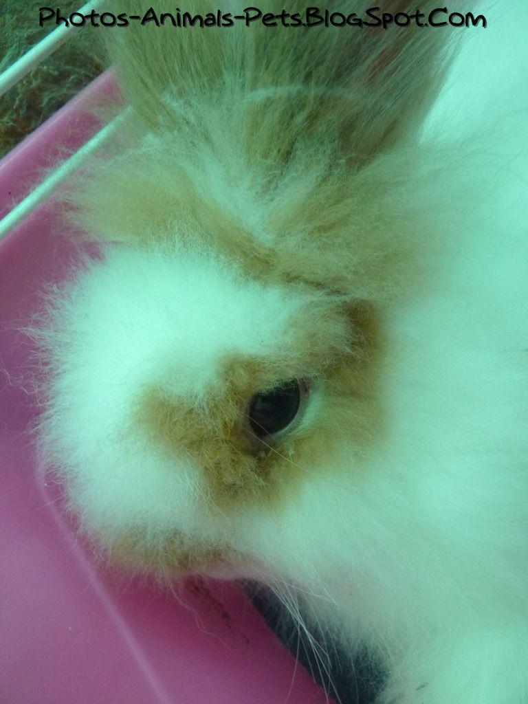 http://3.bp.blogspot.com/-SpNvCDH4ko0/Tb7dRkM8QRI/AAAAAAAAA6c/n1rFhE7LUy4/s1600/Cute%2Brabbit-lion%2Bhead_0003.jpg