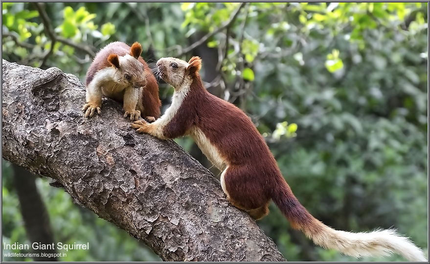 Bhimashankar Wildlife Sanctuary Reviews Tourist Place