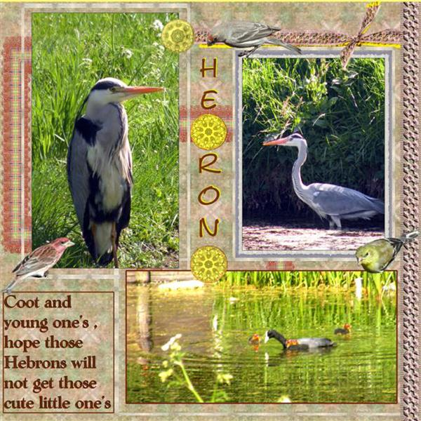 Heron and coots