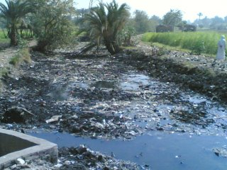 water pollution essays written by students