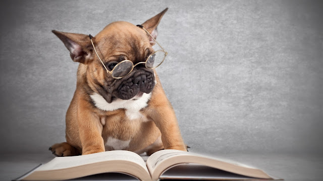 Dog Wearing Glasses Reading a Book HD Wallpaper