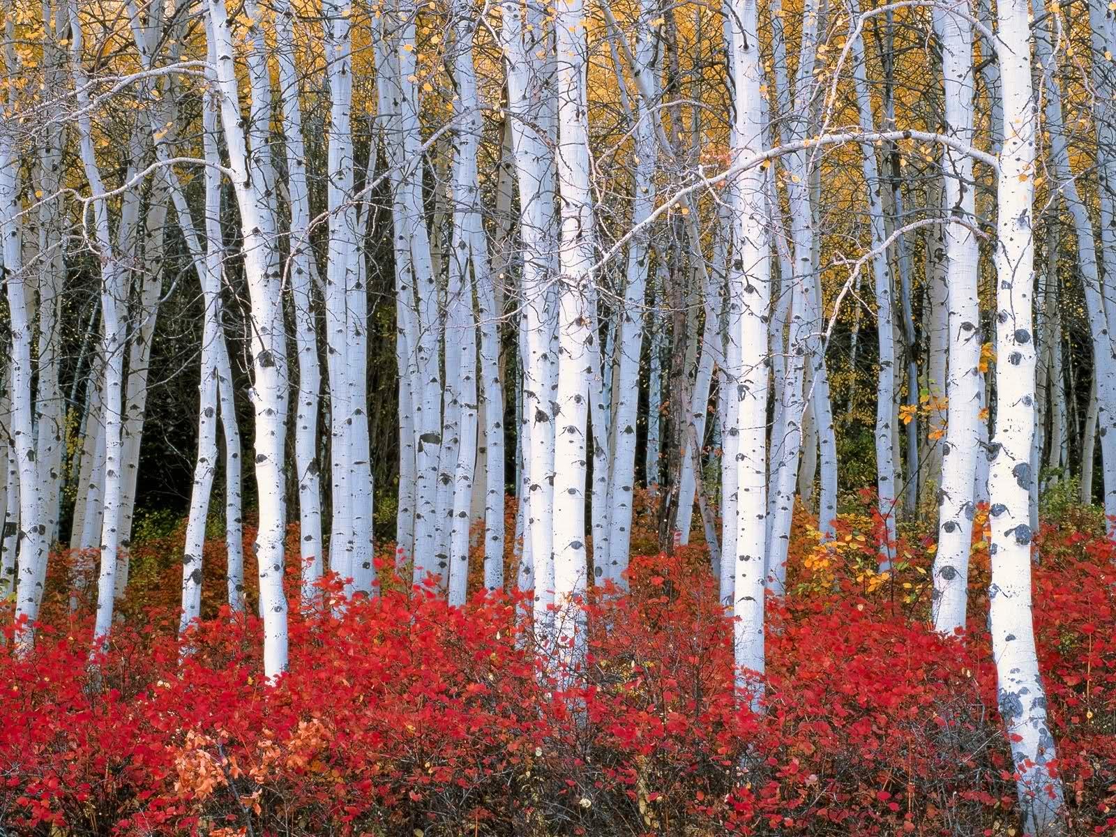 best fall autumn wallpaper forest