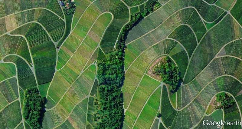 Vineyads, Weinstadt, Germany
