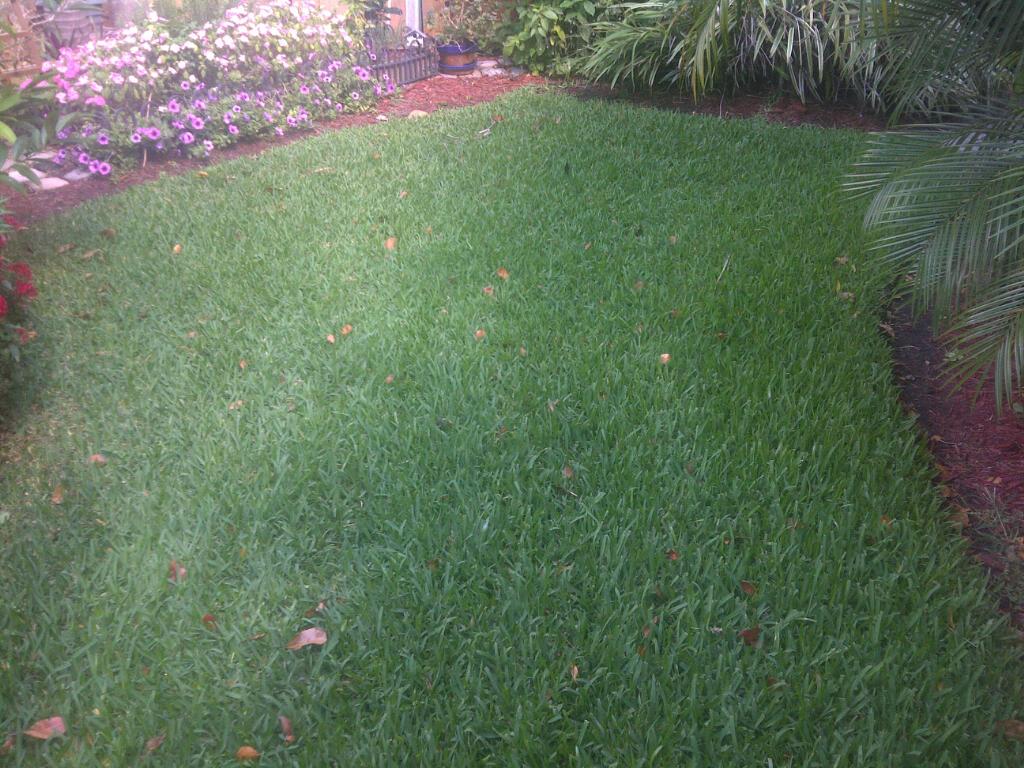Eco Pest Tek Fungus Problem In St Augustine Grass