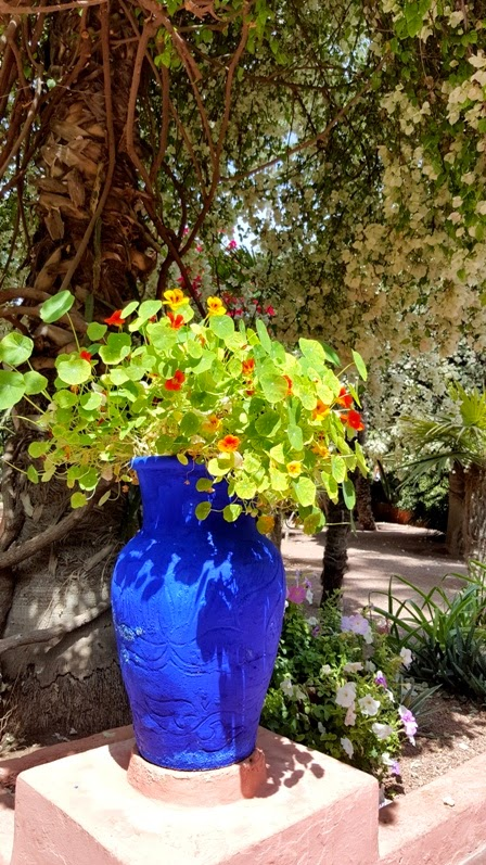 Marrakech jardin majorelle elle field for Jardin majorelle