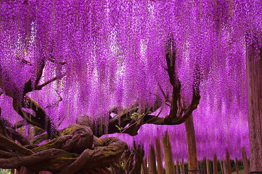 Pohon Indah