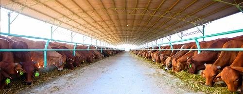 """Bầu Đức: """"Bán nửa giấc mơ tại Yangon lấy vốn nuôi bò"""""""