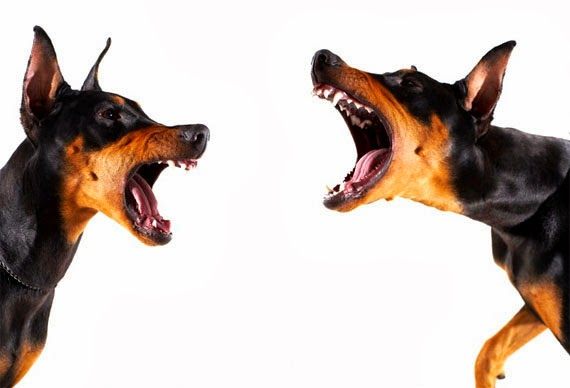 Cão agressivo com DNA modificado