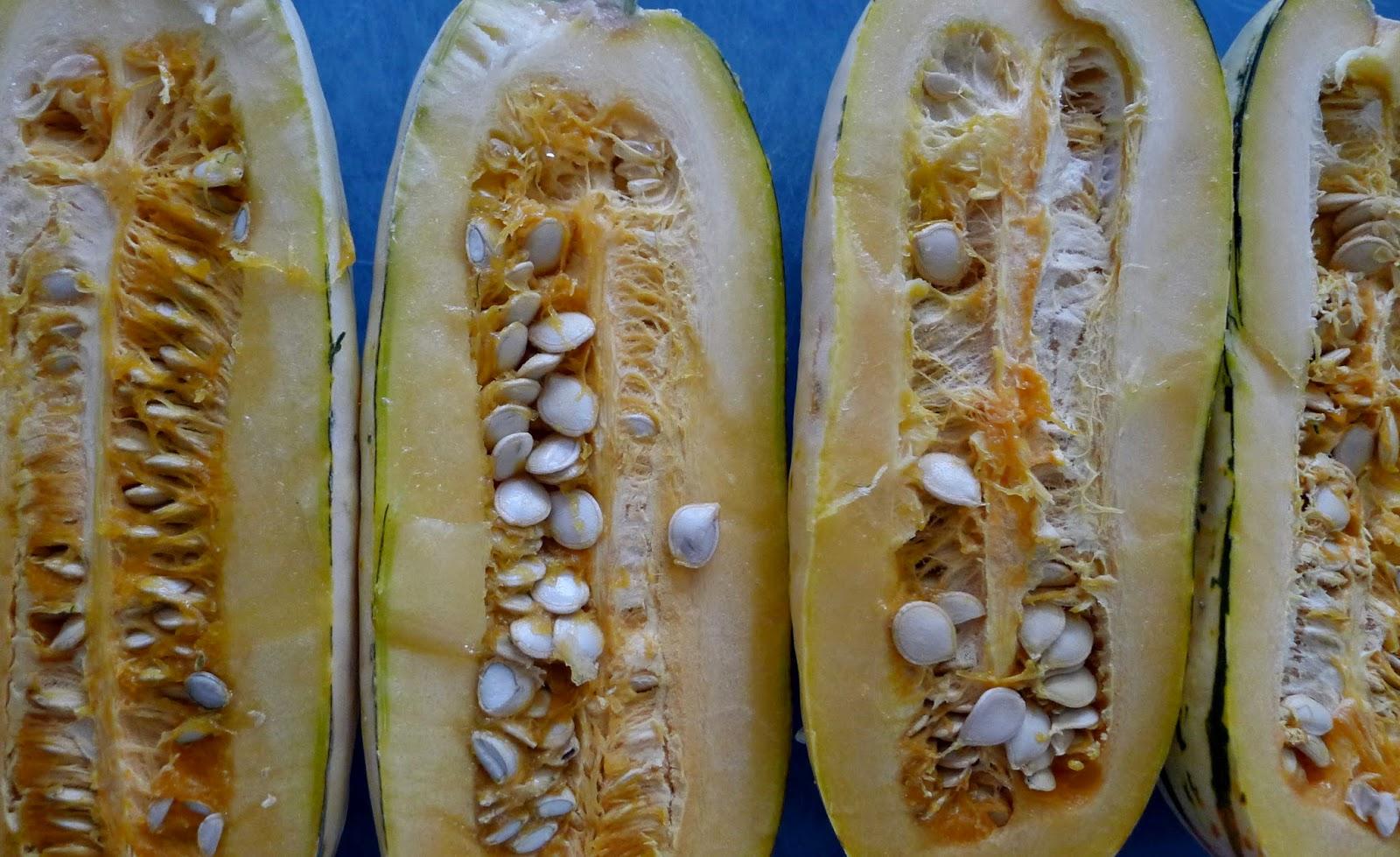 delicata squash, squash seeds, urban farming, gardening