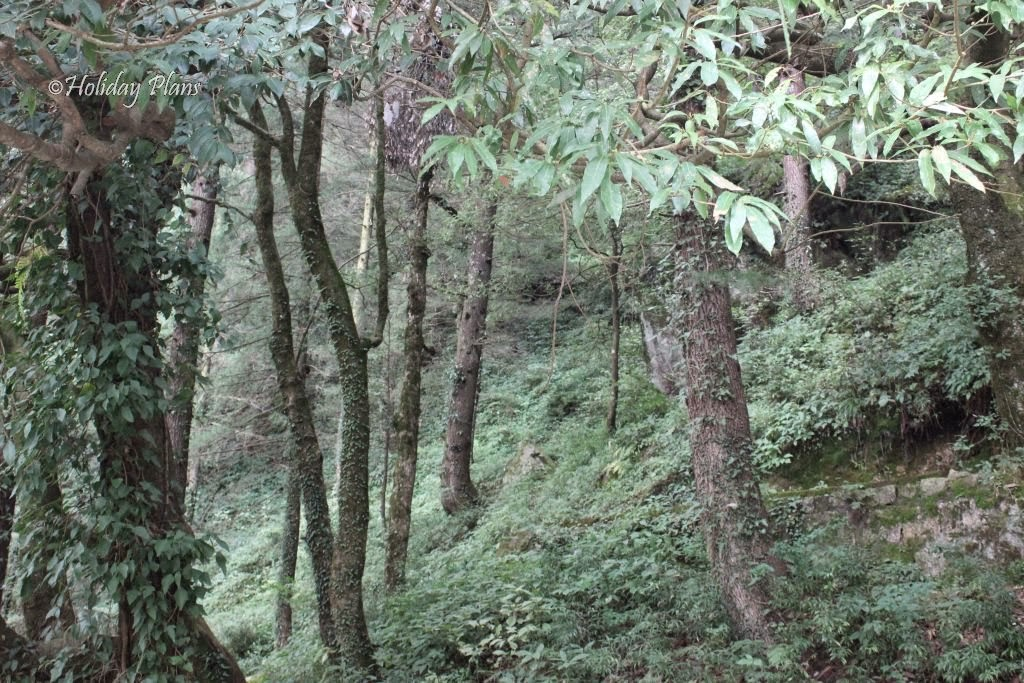 Dense forest near Subhash Baoli
