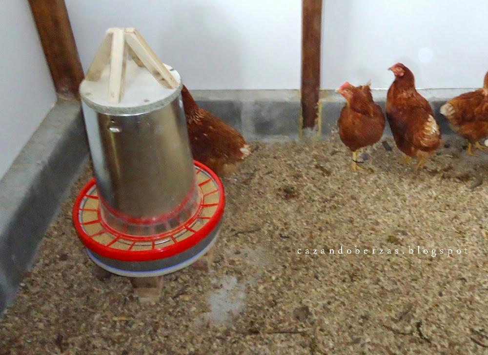 C mo construir un gallinero de fin de semana en 9 pasos for Como hacer un piso de cemento paso a paso