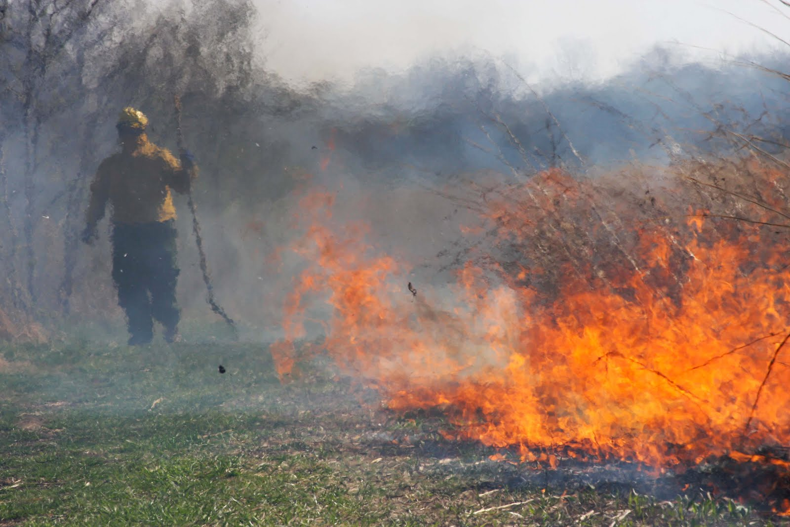 Fighting fire with fire: State policy hampers use of controlled burns