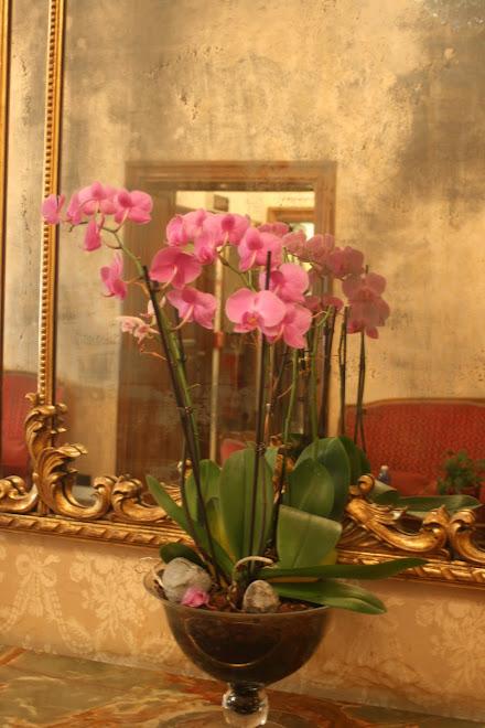 Rome, l'orchidée