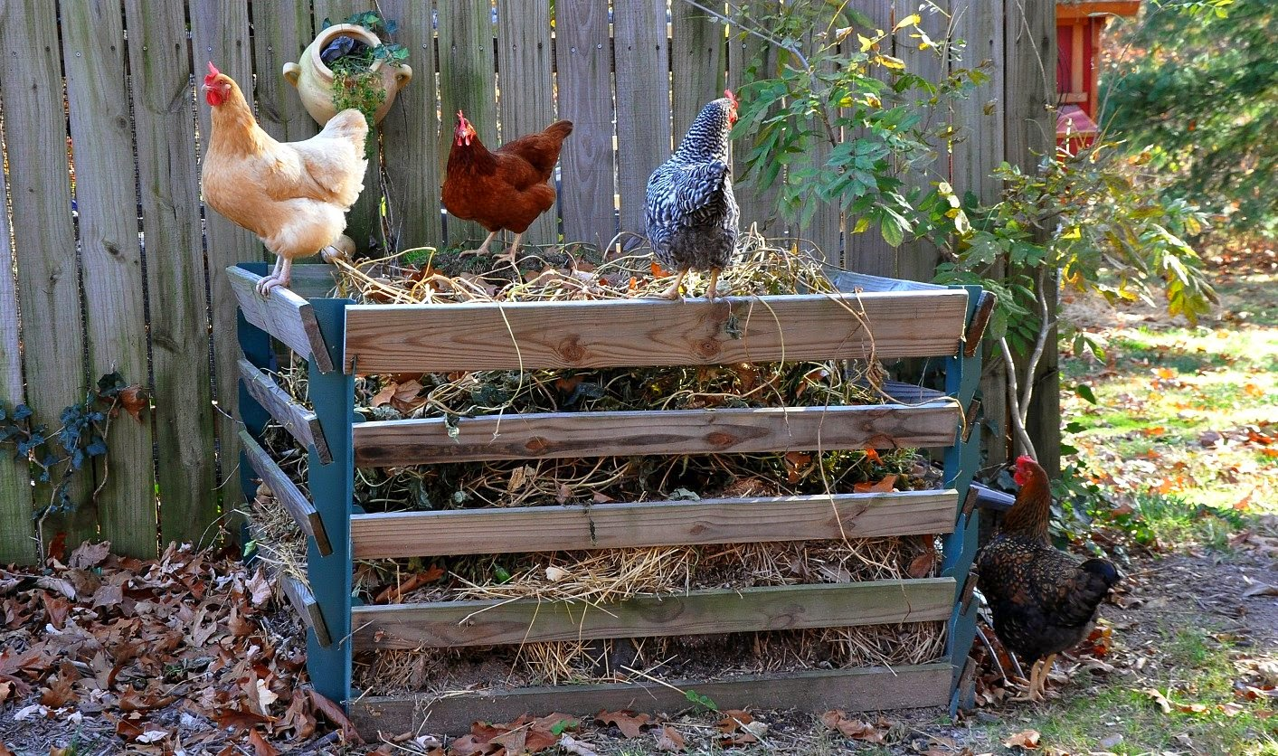diy chicken manure tumbling composter community chickens