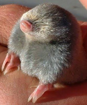Newborn platypus baby platypus newborn