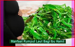 Manfaat Rumput Laut Bagi Ibu Hamil