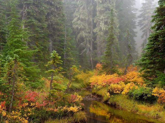 Anh+dep+Boxgiaitri 034 Hình nền máy tính: Chủ đề Ảnh đẹp thiên nhiên