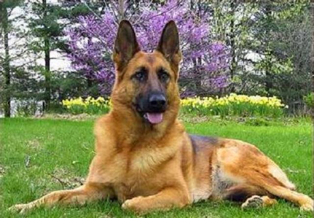 Monta un negocio de perros guardianes
