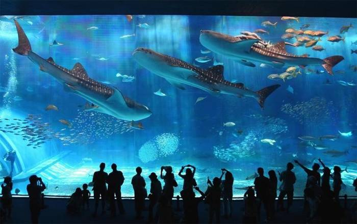 The Okinawa Churaumi Aquarium (Tyuraumi) is located in Japan, in Okinawa. Before the construction of the aquarium in Atlanta Tyuraumi was the world's largest such facility. Seaquarium has four floors and is designed to be able to fully display the life of the Japanese islands.