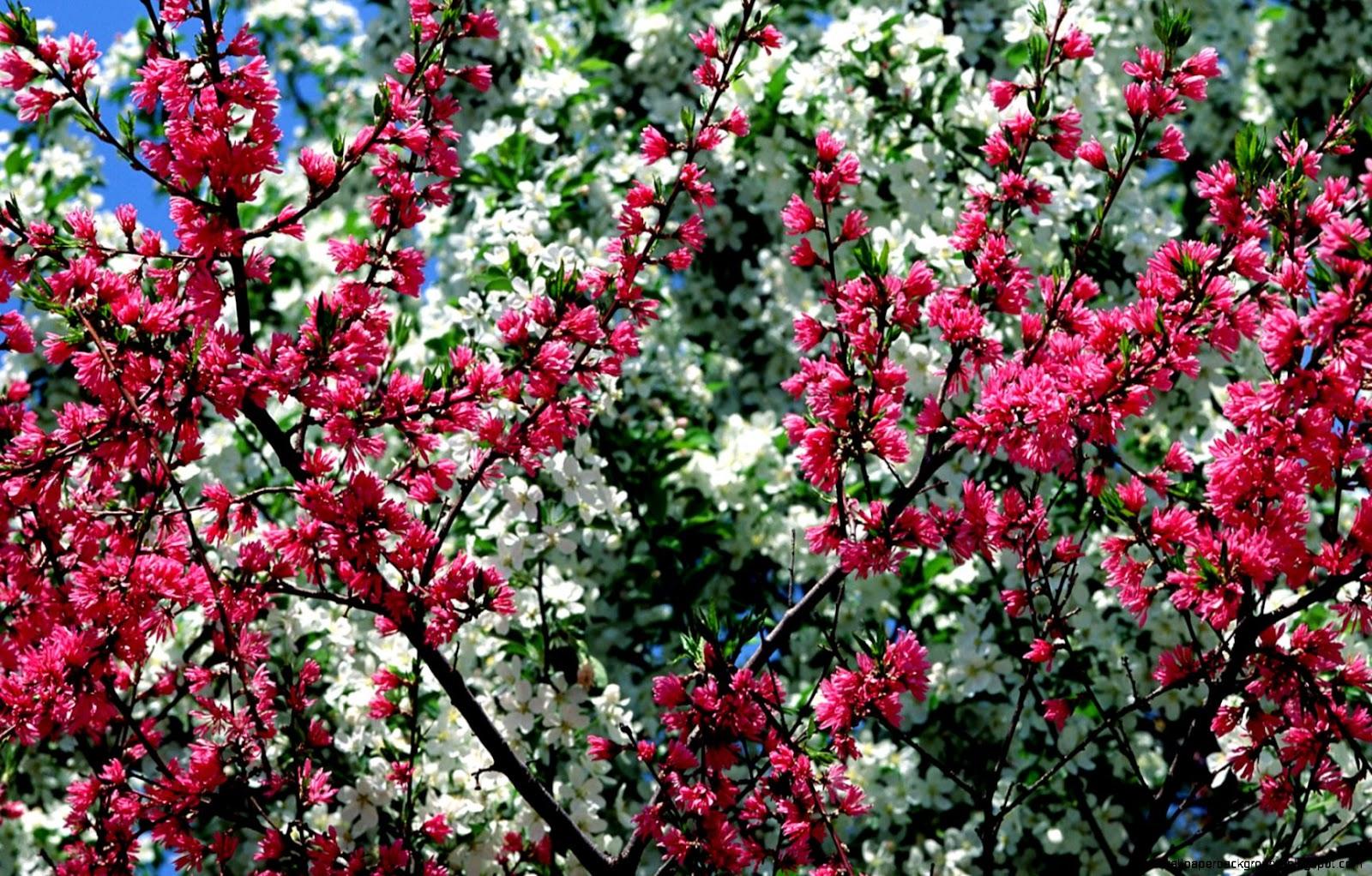 Spring Flower Desktop Pictures Wallpaper Best Wallpaper Background