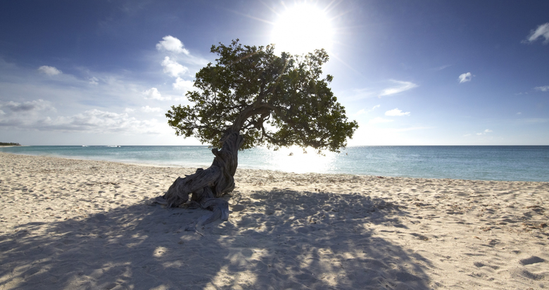 Aruba.com Fofoti Tree on Eagle Beach Aruba- Peaches and Bear Travel Blog