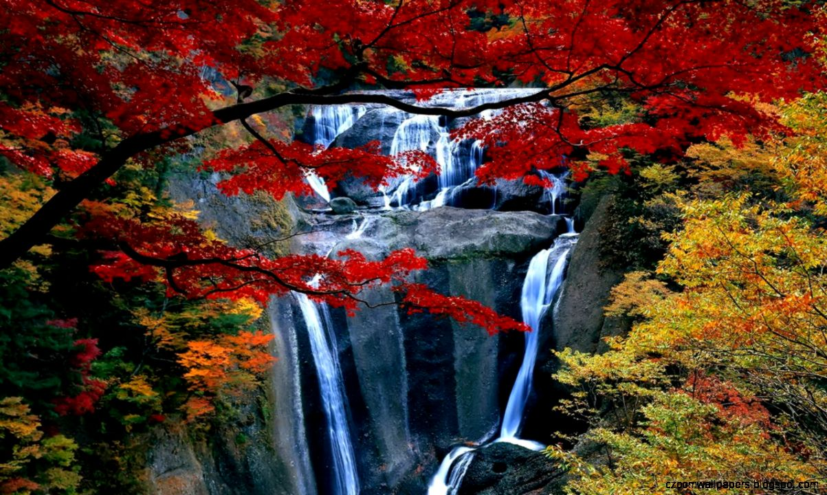 2 Hours Relax with Autumn Waterfall   Natural Sounds   Nature