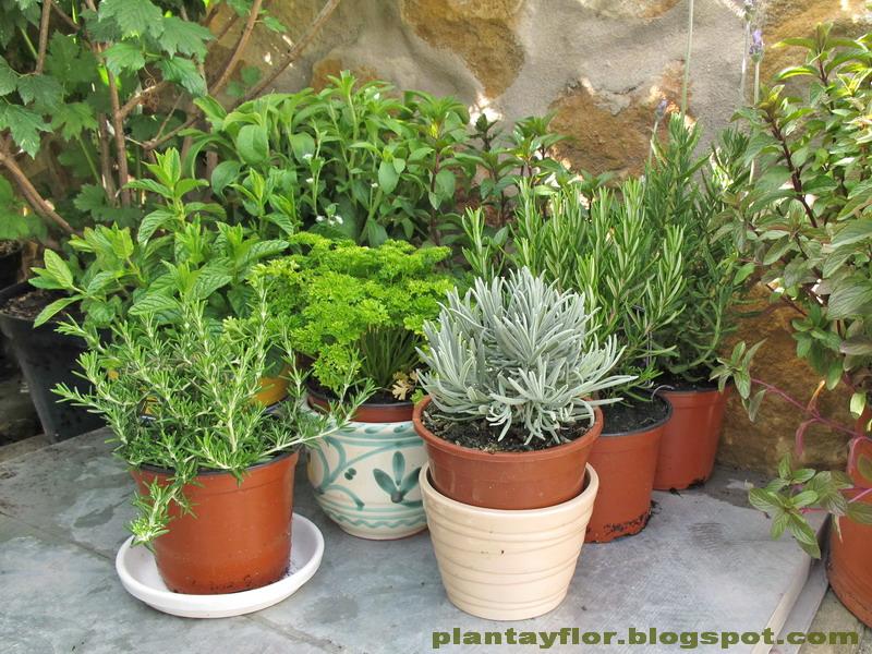 Plantas y flores arom ticas en casa for Jardinera plantas aromaticas