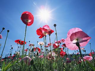 flores silvestres tocando el sol
