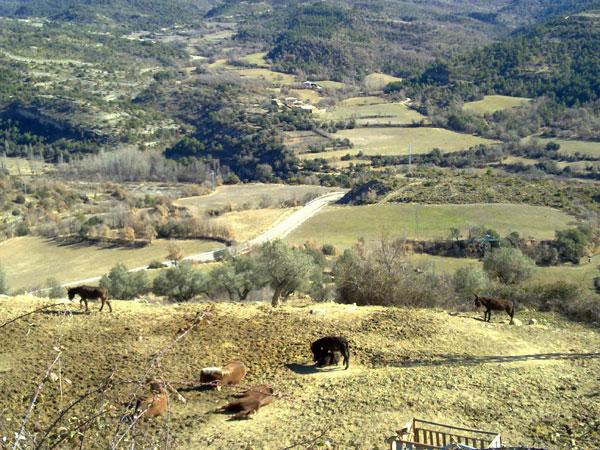 burros en el pirineo
