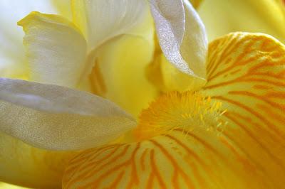 http://3.bp.blogspot.com/-SsJmLRvXwmk/TeeQs2tyL0I/AAAAAAAAAJY/Q35SkpIsJHc/s1600/Nature+www.telugu-wallpaper.blogspot.com+%2528126%2529.jpg