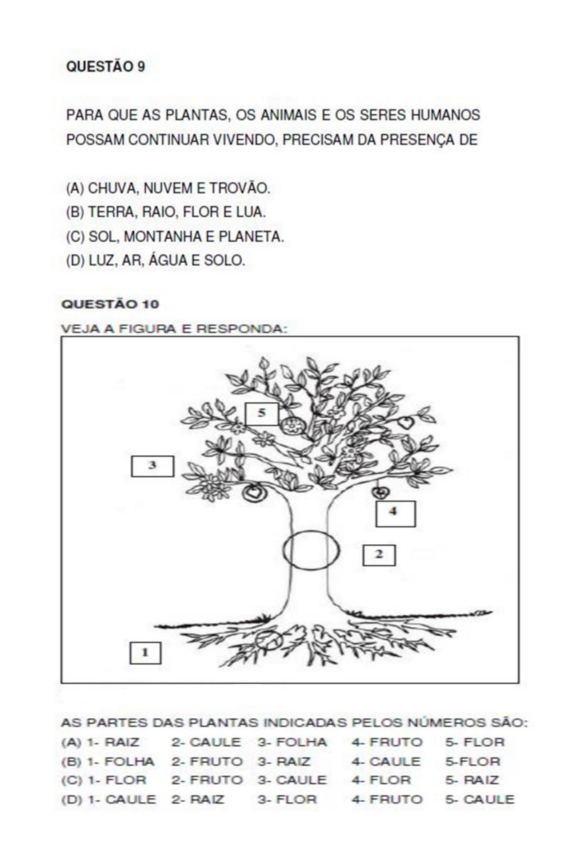 PROVA DE CI  NCIAS 2   ANO FUNDAMENTAL
