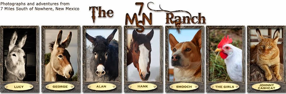 The 7MSN Ranch