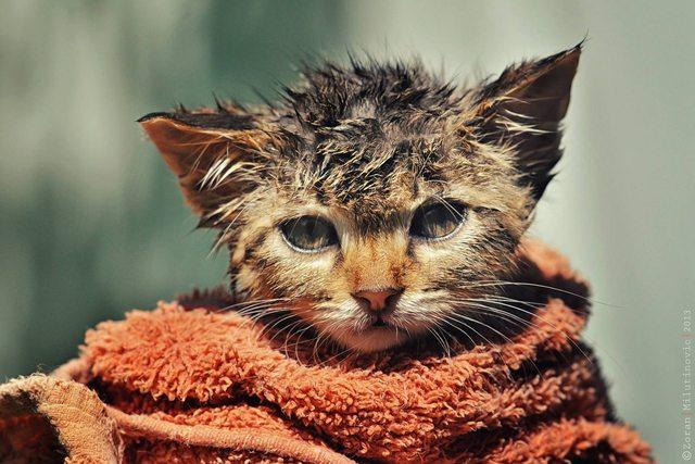 Me pongo como gato mojado cuando...