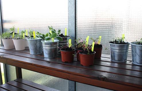 Veggie garden balcony