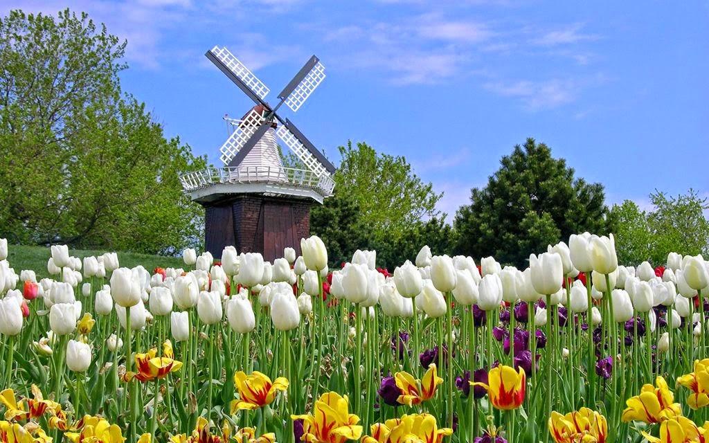 cánh đồng hoa đẹp nhất