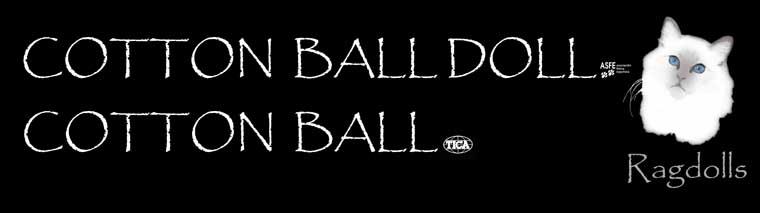 Cottonballragdoll