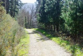 Ruta de los molinos, camino