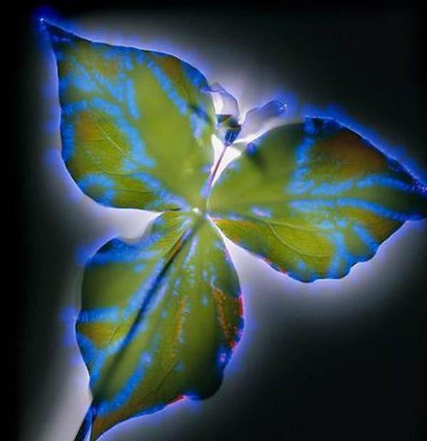 цветы под электричеством