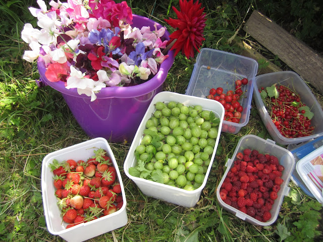 a bucket of sweet peas, pots of strawberries, cherries, raspberries and gooseberries, along with the last redcurrants.