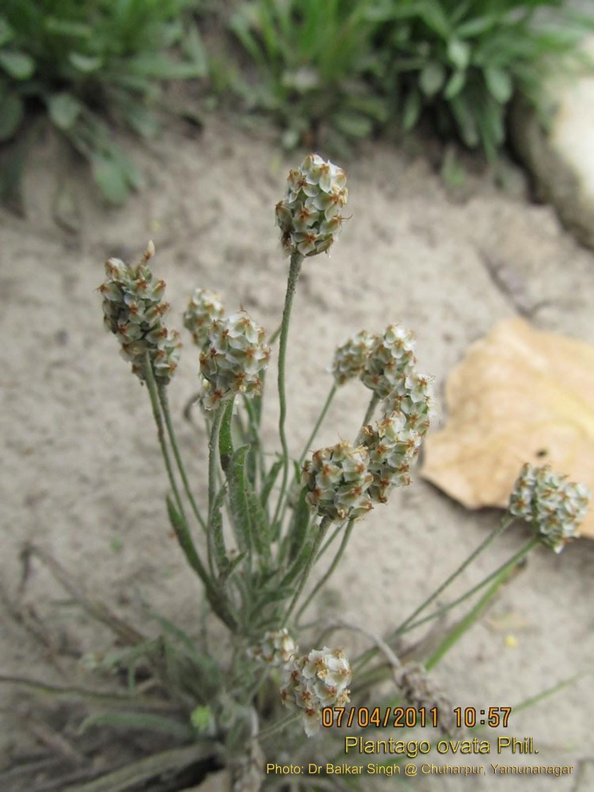 Medicinal plants wednesday april 3 2013 ccuart Choice Image
