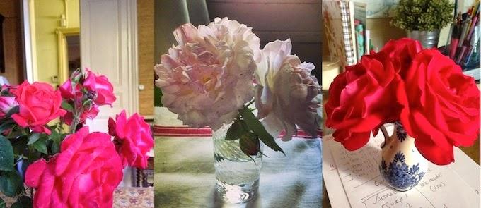 rosas unbonmoment