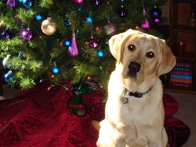regalos perros labradores